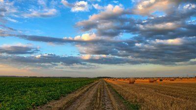 AG-Tech: la robotica nel settore agricolo